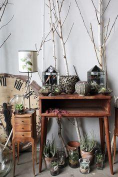 Cabinet de curiosités végétales Inside closet via Nat et nature