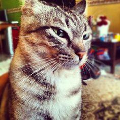 152 best photobomb kate stink eye images  funny animals