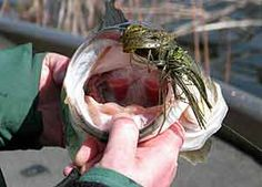 Catching Spring Lunkers | The Ultimate Bass Fishing Resource Guide® LLC