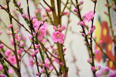 peach tree / 桃