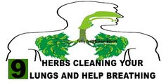 9 Herbs Cleaning Your Lungs And Help Breathing | Family Health Freedom Network