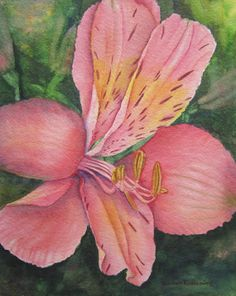 Pink Lily Flower Painting Art Print of Original Alstroemeria Watercolor by Barbara Rosenzweig, matted 16x20 $52.00