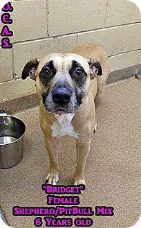Triadelphia, WV - Pit Bull Terrier/Shepherd (Unknown Type) Mix. Meet 1-7 Bridget, a dog for adoption. http://www.adoptapet.com/pet/15558376-triadelphia-west-virginia-pit-bull-terrier-mix