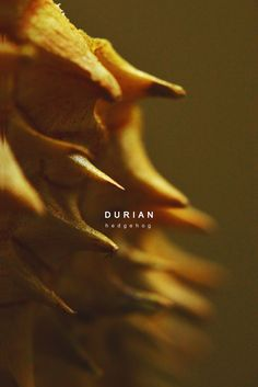 durian on Behance Durian Tree, Car Logo Design, Fruit Photography, Fruit And Veg, Food And Drink, Pictures, Behance, Organic, Mood