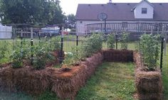 My husband and I used to do this in Montana. Easy raised beds. Straw bales.