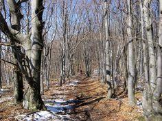 Homoljske planine  #trail #running #runningtrail