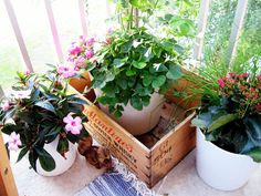 Love the idea of using an old wooden box as a planter - but would it work in rainy London?
