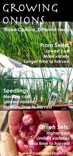 Guide to growing onions different ways! Super helpful.