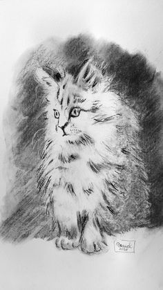 #cat #charcoal #drawing #art #portrait #puppie Charcoal Drawing, Drawing Art, Pencil Drawings, Puppies, Portrait, Cats, Animals, Pencil, To Draw