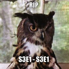 """We've lost some good friends, like this owl: 