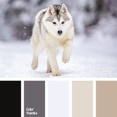 Color Palette #3734 | Color Palette Ideas | Bloglovin'