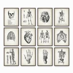Human Anatomy Antique Art Print Set of 12 - Vintage Anatomy Home Decor - Antique Book Plate - Medical Student Gift Idea Picture Set of 12  Printed using high quality archival inks on heavy-weight archival paper with a smooth matte finish. A fantastic gift or a fabulous addition to your home!  Please choose between different sizes.  ---------------------------------------------------------------------------------------------  Shop home:  http://www.etsy.com/uk/shop/QuantumPrints…