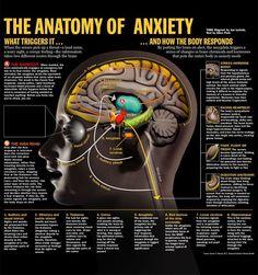 Anatomy of Anxiety corehealthcoaching.com.au