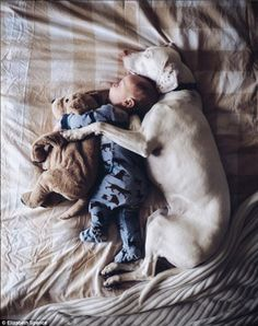 Canine companions: The baby boy is the filling in a soft, furry, doggy sandwich with his toy and the real thing - more at megacutie.co.uk
