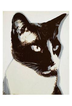 andy warhol, cat, 1976