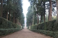 Cyprus Lane - Boboli Gardens