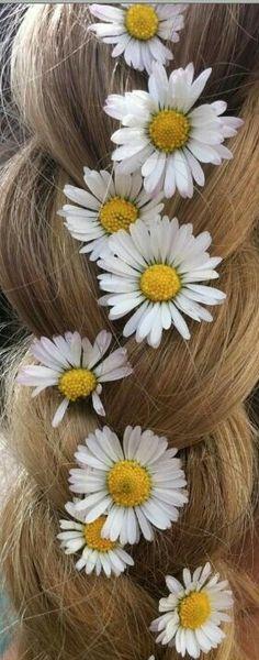 << daisy delights >>