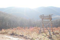 frozen hungarian forest baithing in sunlight