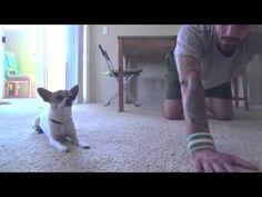 Perro haciendo ejercicio con su dueño. Buenísimo