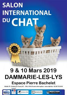Salon du chat - France (FR) - Salon du chat le 9 et 10 mars 2019 à Dammarie-les-Lys (77) Mr Chat, Snap Chat, Chat Maine Coon, Plastic Laundry Basket, Wicker, Marie, Photos, Organization, Animaux