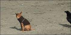 This dog who's the victim of a mean crow's dirty prank. | The 40 Greatest Dog GIFs Of All Time