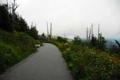 Clingmans Dome walking trail we should do this @Victoria Poteete !!!!