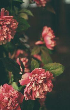 •❁• Pinterest • @cortneyzotter