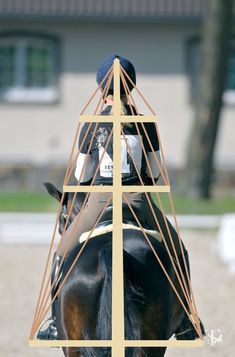 The rider's body is like a ship's mast. Any change in position in any individual body part affects the body's position as a whole. From Rider + Horse = 1 #horses #riding #equestrian #equitation #RidingTips