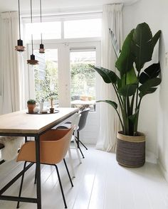 eetkamer_strelitzia dining room with big indoor plants and white wood floors - HOME - White Wood Floors, Home, House Plants Indoor, Large Homes, Dining Room Decor, White Rooms, Big Indoor Plants, House Plants Decor, Living Room Plants