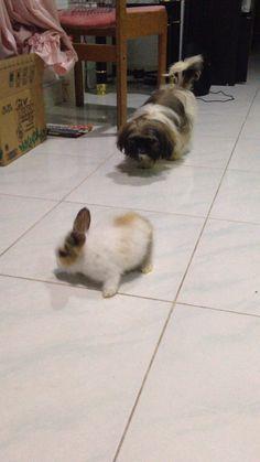 Shinchan hunting for bunny