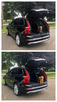 Volvo Dogs Ace enjoying the safety and security of the Volvo dog gate in the Volvo Luxury SUV Volvo Suv, Volvo Xc90, Cars Usa, Luxury Suv, Pet Safe, Safety And Security, Dog Harness, Rear Seat, Pet Accessories