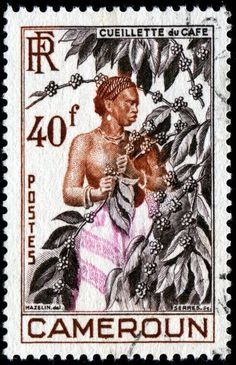 Worker picking coffee beans, designed by Charles Mazelin, and issued for use in Cameroun on November 29, 1954.