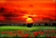 Znalezione obrazy dla zapytania łąka zachód słońca