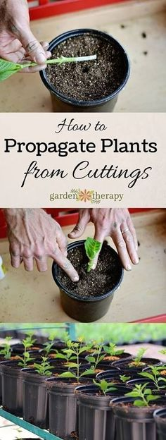 Gardening Propagate Plants From Cuttings and Save Hundreds of Dollars (Heck, You Could Even Make Money!) - Expand your gardening by starting new plants from cuttings. Propagation your plants from cuttings is a valuable skill to have as your garden grows. Hydroponic Gardening, Hydroponics, Organic Gardening, Gardening Tips, Aquaponics System, Indoor Gardening, Organic Soil, Urban Gardening, Pot Jardin