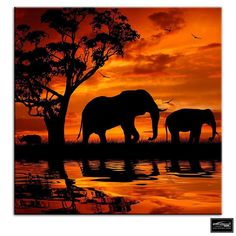 Elephant African Sunset Animals BOX FRAMED CANVAS ART Picture HDR 280gsm | eBay