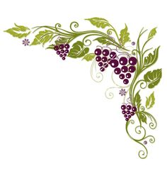 Grape Vine Border Vine grapes border vector