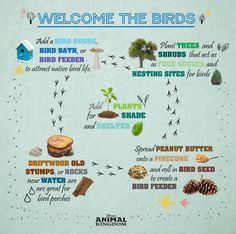 DIY Welcome the Birds to your Home