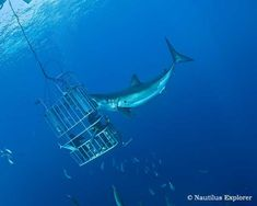 shark diving - Αναζήτηση Google