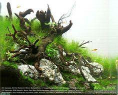 Aquarium / Planted Tank / Aquascape
