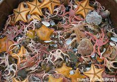 somebody say starfish?