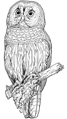 Backyard Animals and Nature Coloring Books Free Coloring Pages Owl Coloring Pages, Printable Coloring Pages, Coloring Sheets, Coloring Books, Mandala Coloring, Art Zen, Wood Burning Patterns, Owl Art, Pyrography