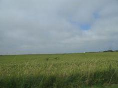 Vemb, Denmark  field and tiny church