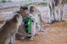 The youngsters are learning the proper monkey method of gift extraction, which should come in hand next December (if not sooner).