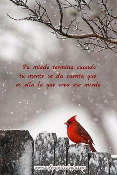 My father was born in December. On a snowy winter day, when I'm feeding the birds and I see a beautiful red cardinal nearby, I smile. Dad has come to visit me. Pretty Birds, Beautiful Birds, Winter Szenen, Texas Winter, Cardinal Birds, Tier Fotos, Jolie Photo, Bird Feathers, Cute Animals