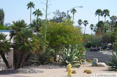 Desert landscaping ideas allow creating beautiful low maintenance yards and beautifully accentuate homes in hot and dry climates