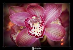 simply elegant orchid