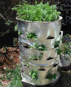 Easy vertical garden using an upcycled 44 gallon metal drum! Best way to recycle and create a vegetable garden at the same time. the best part is it deal with your compost to.