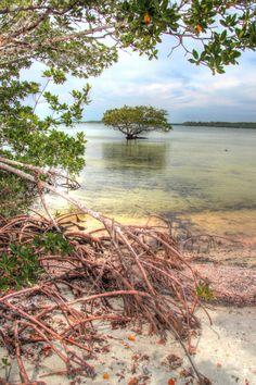 mangroves, Tiger Key, Everglades National Park, Florida
