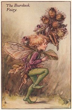 FLOWER FAIRIES/BOTANICALS: The Burdock Fairy; This is an original vintage Cicely Mary Barker Flower fairies colour print. It is not a modern reproduction, c1935; approximate size 11.0 x 7.0cm, 4.5 x 2.75 inches