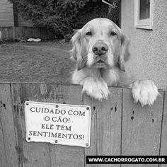 CachorroGato